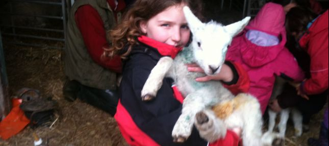 Kate taking a lamb for it's feed